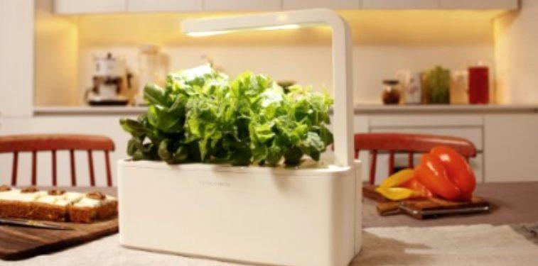 Le potager d'intérieur pour cultiver des légumes en appartement