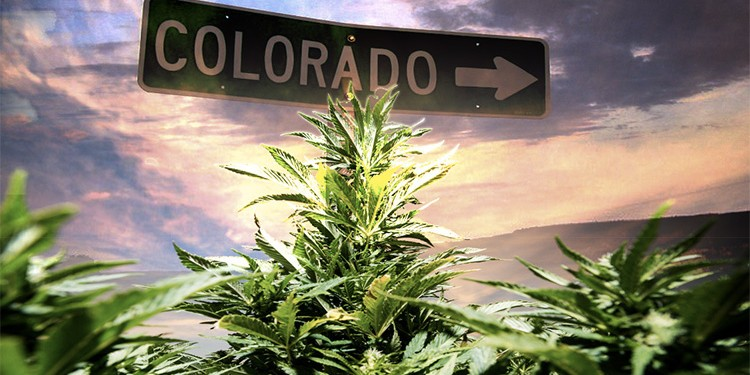 Cannabis colorado