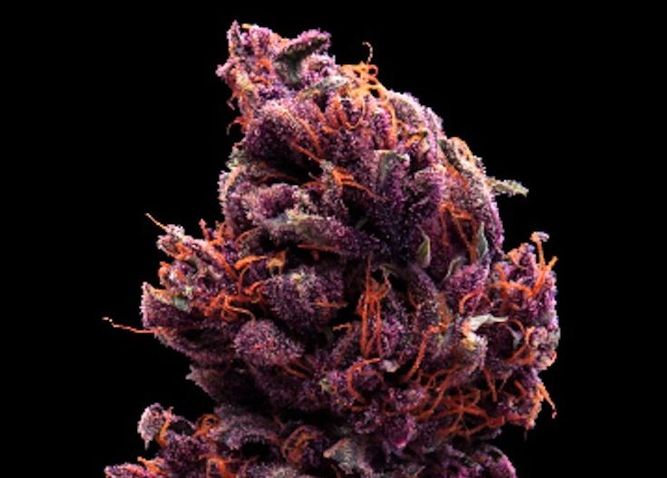 Grape Ape
