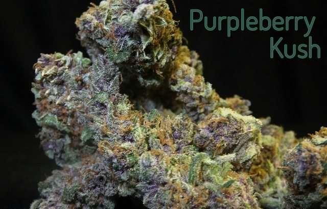 Purpleberry Kush