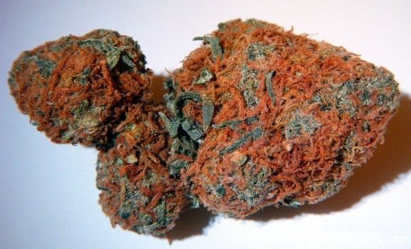 jamaican red hair weed - photo #7